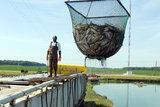 channel catfish food chain